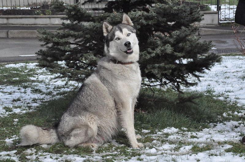 WolfYal0